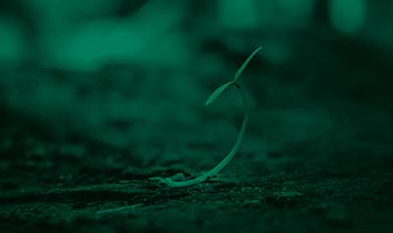 marroquin-web-categorias-semillas