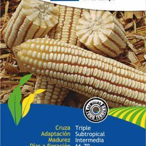 Agropecuaria Marroquín Ares 50 mil para grano